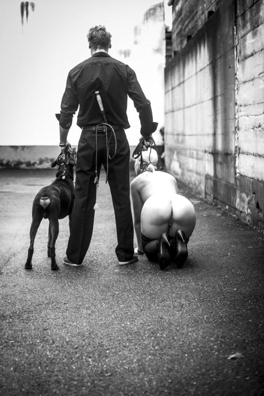 Perro dueño y perra